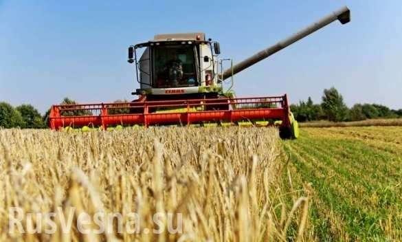 Россия стала крупнейшим поставщиком сельхозтоваров в мире | Русская весна