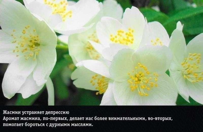 Природные ароматы, неожиданно влияющие на эмоции и здоровье человека