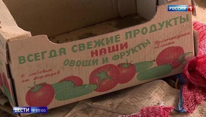 В Волгоградской области на подпольной ферме выращивали овощи-мутанты