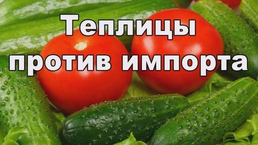 Овощи России. Импортозамещение теплиц