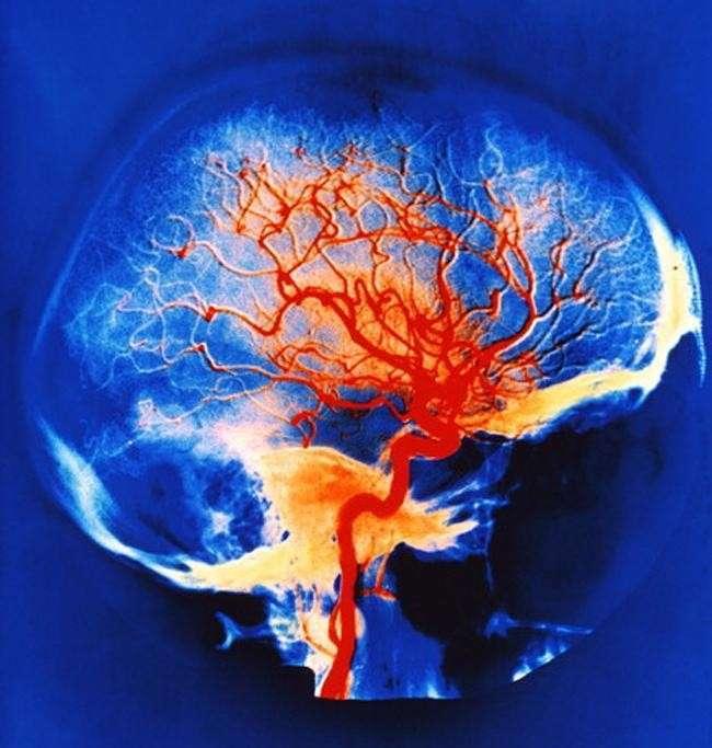 Путешествие в мозг