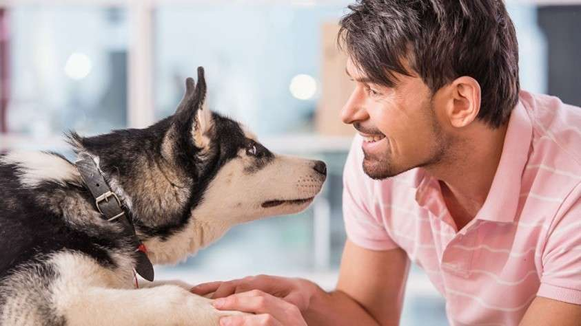 ГМО в корме для собак, обнаружило Роскачество