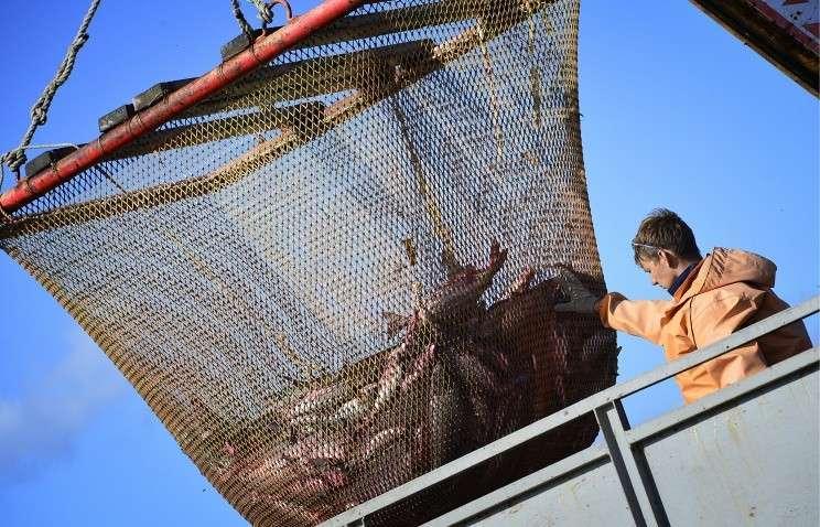В Хабаровском крае побит столетний рекорд вылова тихоокеанских лососей