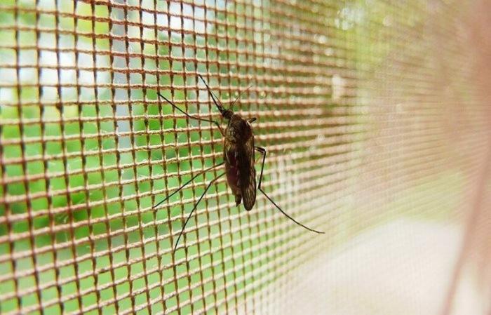 Как защитится от комаров без химии. Запахи растений, которые отпугивают комаров