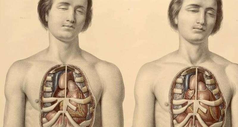 В человеческом теле найден новый орган