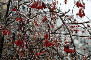 Ледяной дождь в Чебоксарах (фоторепортаж)