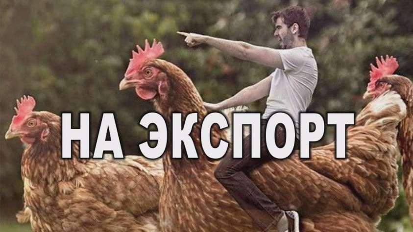 Импортозамещение в птицеводстве России: куры расправили крылья