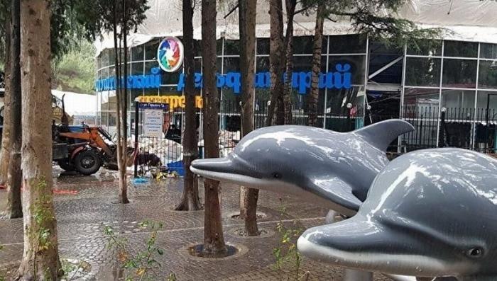Дельфины в алуштинском дельфинарии находятся в критическом состоянии: их 2 месяца держат в «тазиках»
