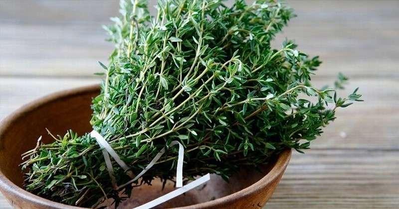 Чабрец – трава, которая лечит более полусотни недугов. Бесценный дар природы