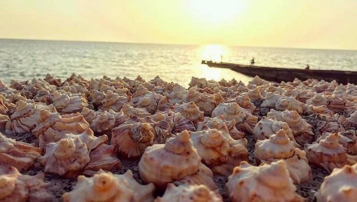 Курорты Краснодарского края с каждым годом устанавливают новые рекорды посещаемости