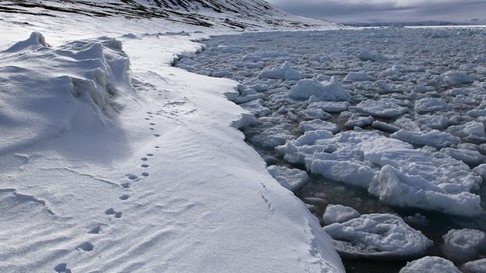 Советник Трампа призвал «бросить вызов» влиянию России в Арктике