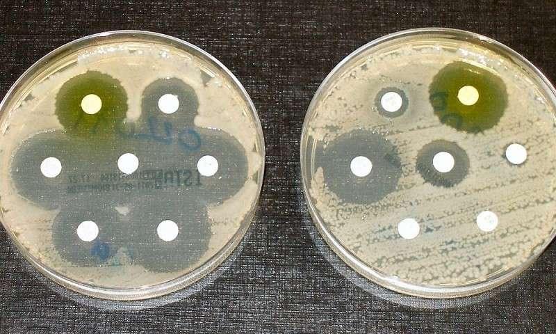 Бактерии мутируют, приспосабливаясь к антибиотикам в речной воде