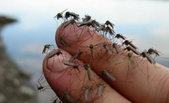 Секретный способ защиты от комаров без всяких репеллентов