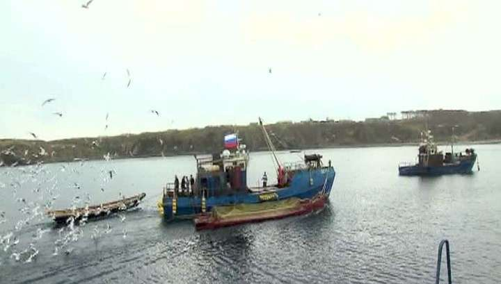 Российские прилавки заполнятся дальневосточной рыбой