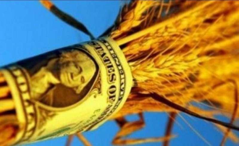 Налоговики раскрыли схему воровства сотен миллиардов долларов, использованную экспортерами зерна
