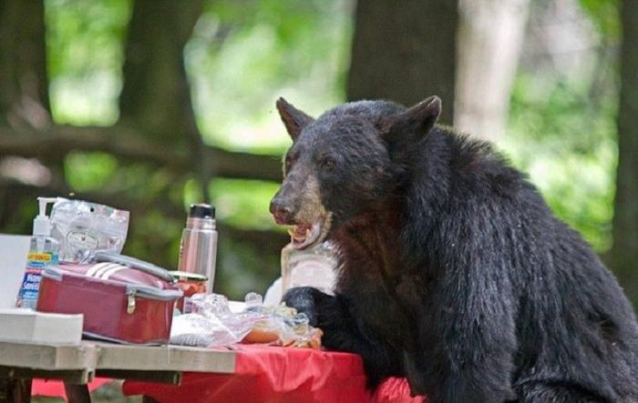 Медведь загнал монтажников на вышку и съел их обед: с тебя 182 рубля, Михалыч!