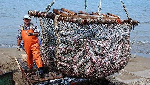 Сахалинская область перенаправила поставки рыбы на внутренний рынок
