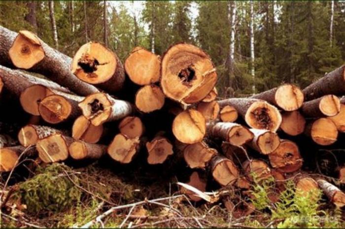 Лесные вырубки и пожары: что в России происходит с лесом?