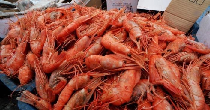 «Рыболовецкий колхоз имени Крымских партизан» запустил производство креветки