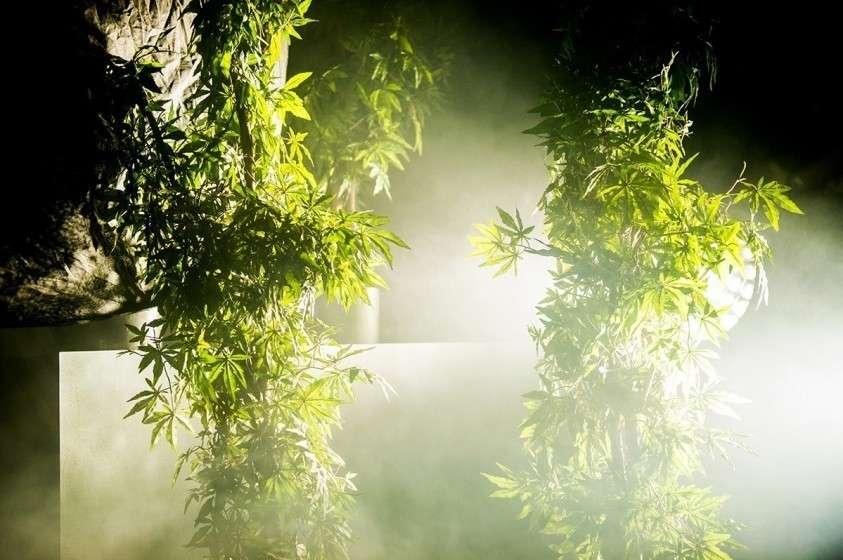 Нарко-Демократия в лучшем виде: Иллинойс полностью легализовал марихуану