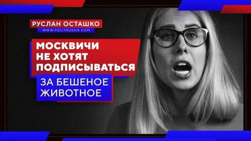 Москвичи не хотят подписываться за бешеное животное – Соболь
