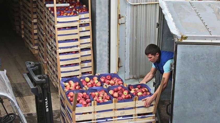 груз яблоки транзит санкции россия