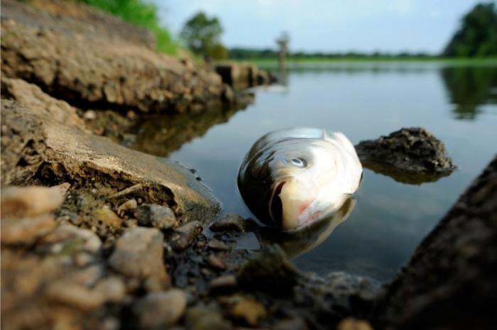 Власти Белоруссии замалчивают экологическую катастрофу