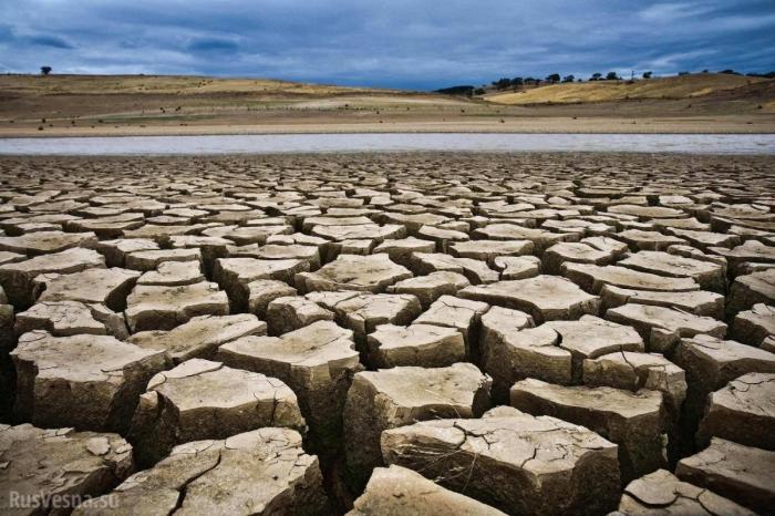 Адская жара атакует новые страны Европы – половина урожая сгорела