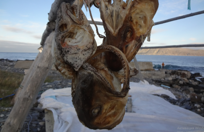 Россию просят не дать Норвегии отравить Северное и Баренцево моря