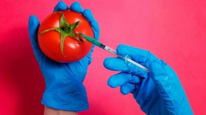 ГМО 2.0: новая отрава вместо натуральных продуктов. Что мы знаем о «пищевом редактировании»