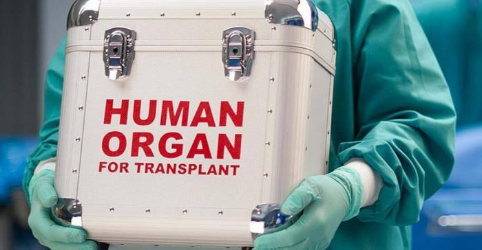 Трансплантация органов действительно помогает больным выжить или нет?