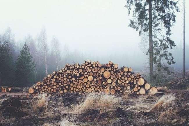 Татьяну Давыденко, рассказавшую о разграблении леса в Красноярском крае, отправили в отставку