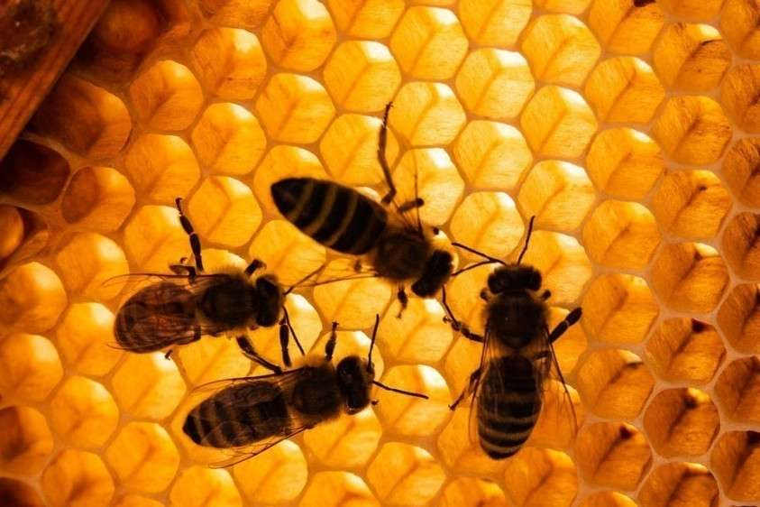 Пчел губит китайская химия: более чем в 20 российских регионах случился настоящий пчеломор