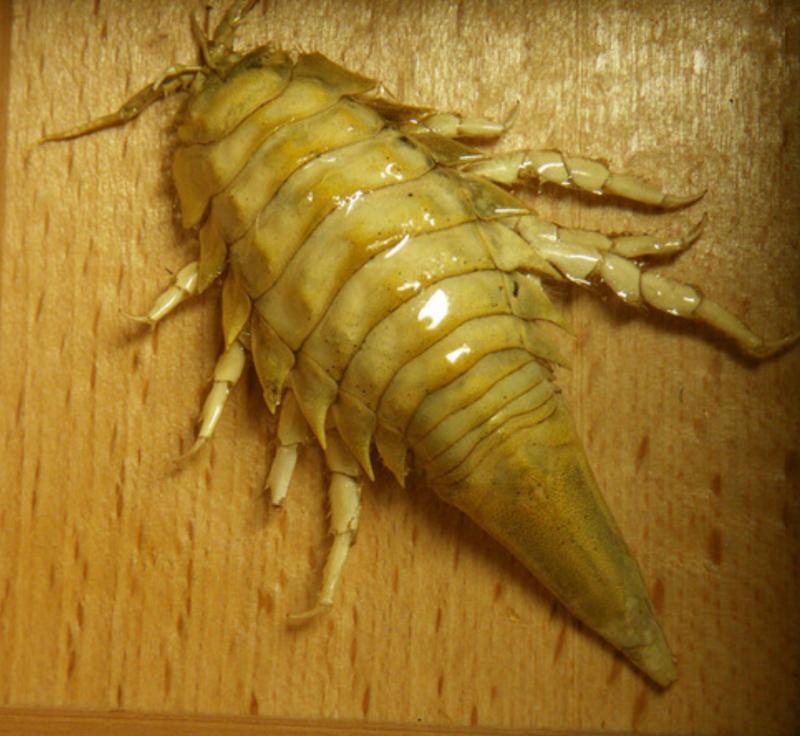 Ужасы США: плотоядные бактерии в Мексиканском Заливе, фекалии, амебы, пожирающие мозг