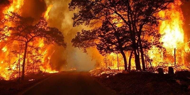 В Красноярском крае нормальный лес вырубили как пострадавший от пожара