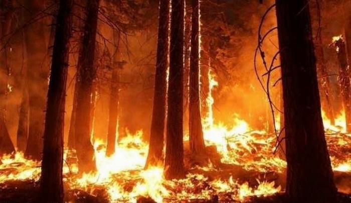 В Сибири горит 3 млн гектаров леса, дым дошёл до Монголии