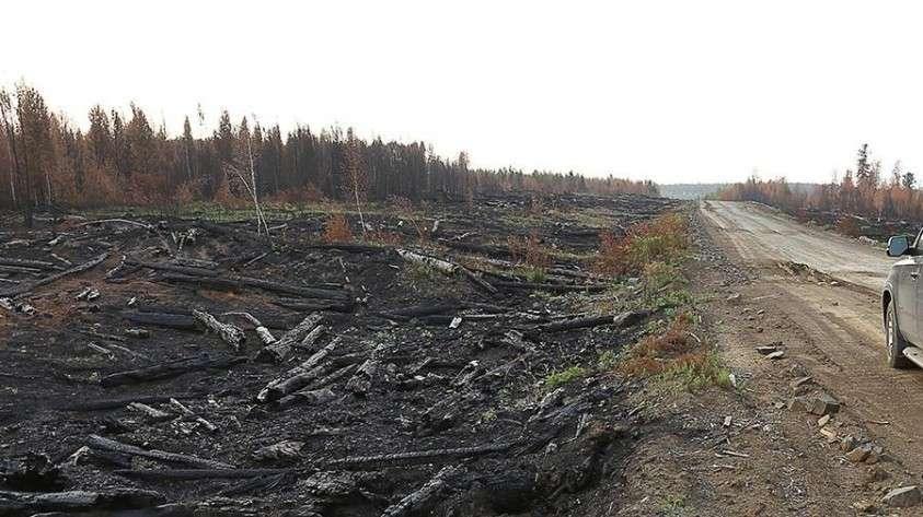 В МЧС назвали причину масштабного распространения пожаров в Сибири