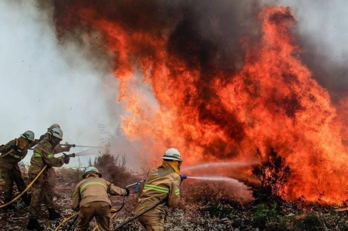 Лесным пожарам в России установят новые границы