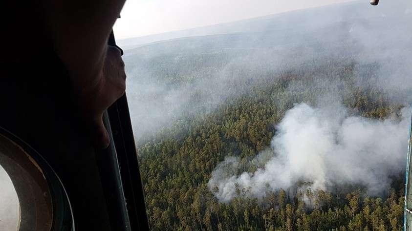 Генпрокуратура заявила о намеренных поджогах лесов в Сибири, чтобы скрыть незаконные вырубки