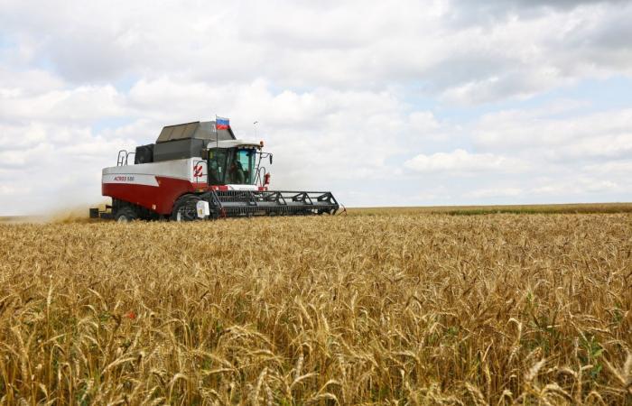 В Крыму за 5 лет в 13 раз увеличилось количество фермерских хозяйств