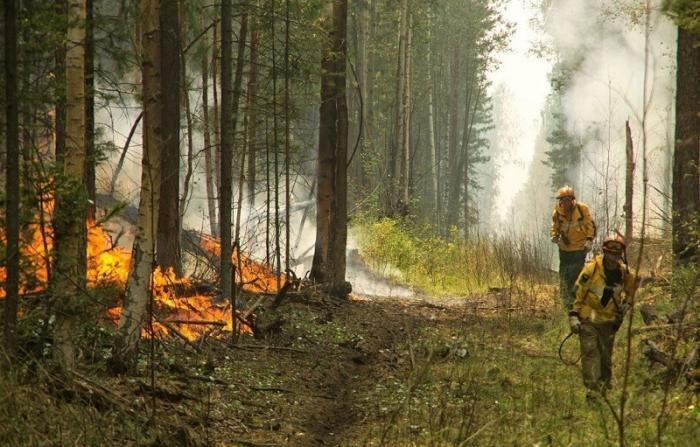 Площадь лесных пожаров в Сибири наконец-то начала сокращаться