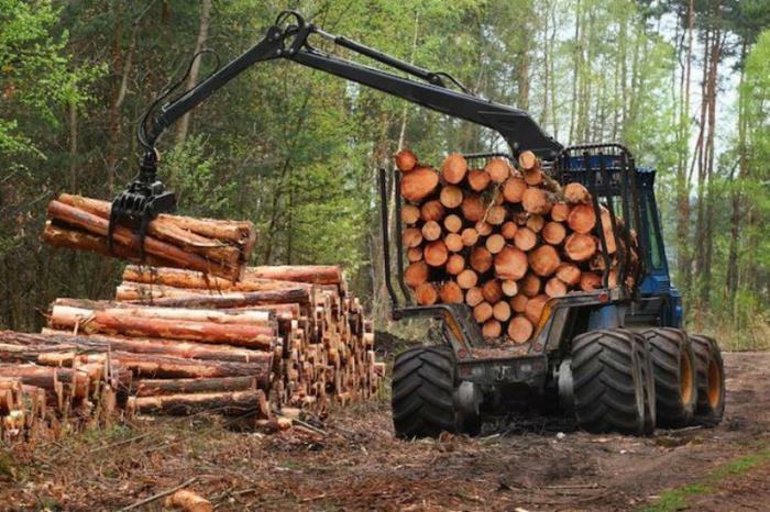 Россия может запретить экспорт леса в Китай, если КНР не поможет в расследовании незаконных вырубок