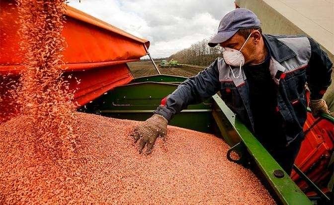 Урожай 2019: Запад ждет, как жара и ливни заставят Россию голодать