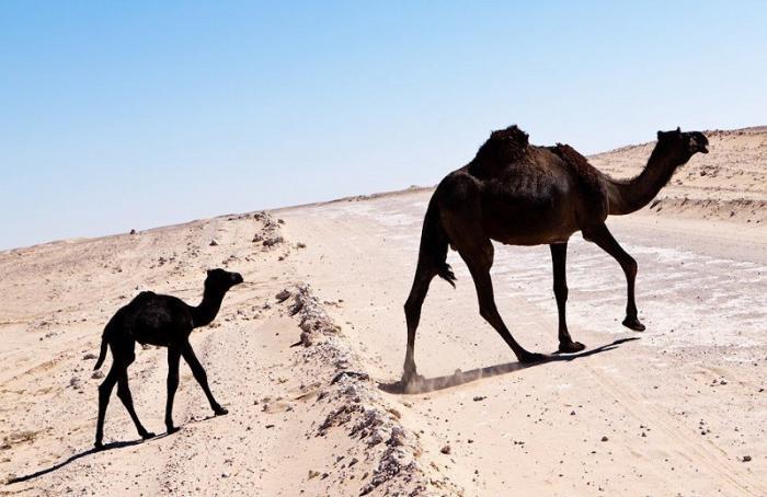 Богатейшее нефтяное королевство Саудовская Аравия остается без самого необходимого