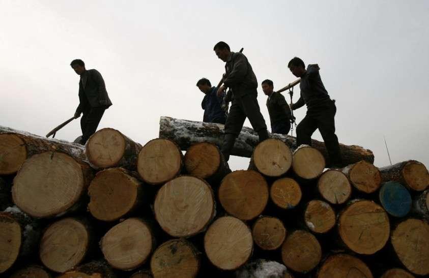 В Китае полностью запретят любую коммерческую вырубку лесов