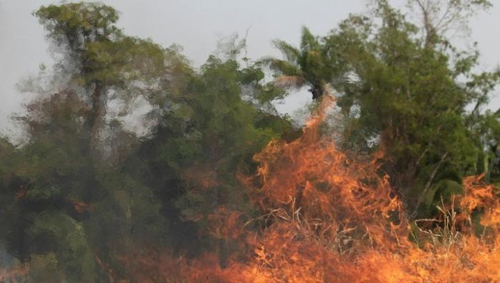 Бразилия горит. Число пожаров постоянно увеличивается