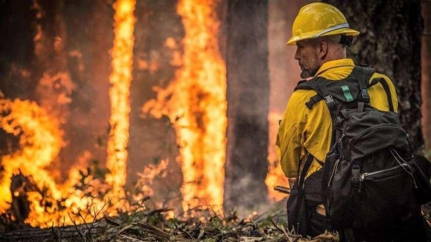 Почему горит Калифорния: причина о которой в США стесняются говорить