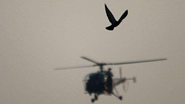 Голубь на фоне вертолета. Архивное фото