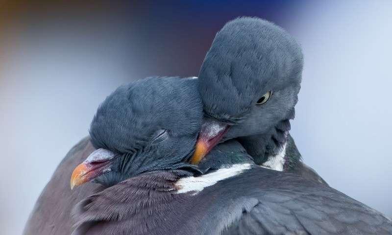 ЦРУ использовало голубей и кошек для шпионажа. Рассекреченные документы