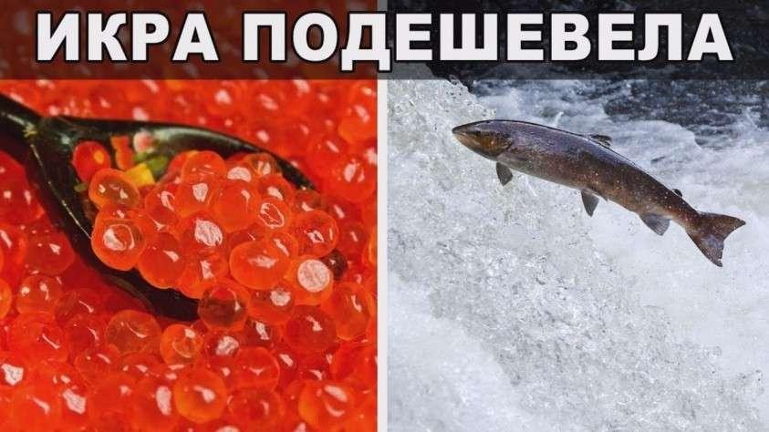Рыболовство и рыбоводство в России. Экспорт вырос на 2.5 млрд долларов за 5 лет